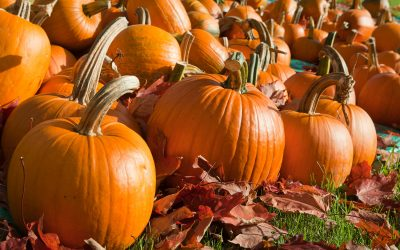 Don't Miss Masthope's Annual Fall Festival/Craft Fair – Oct 7th, 2018